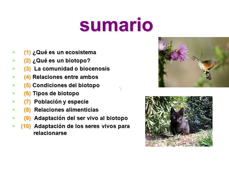 sumario (1) ¿Qué es un ecosistema (1) ¿Qué es un ecosistema (2) ¿Qué es un biotopo? (2) ¿Qué es un biotopo? (3) La comunidad o biocenosis (3) La comun