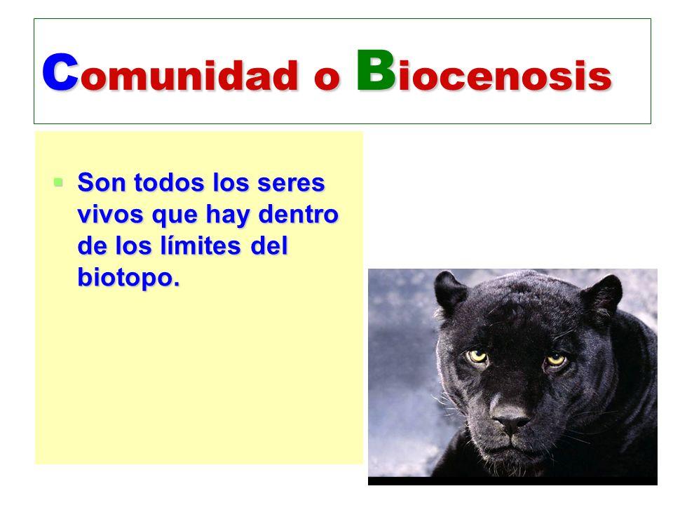 C omunidad o B iocenosis Son todos los seres vivos que hay dentro de los límites del biotopo. Son todos los seres vivos que hay dentro de los límites