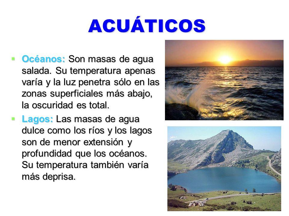 ACUÁTICOS Océanos: Son masas de agua salada. Su temperatura apenas varía y la luz penetra sólo en las zonas superficiales más abajo, la oscuridad es t