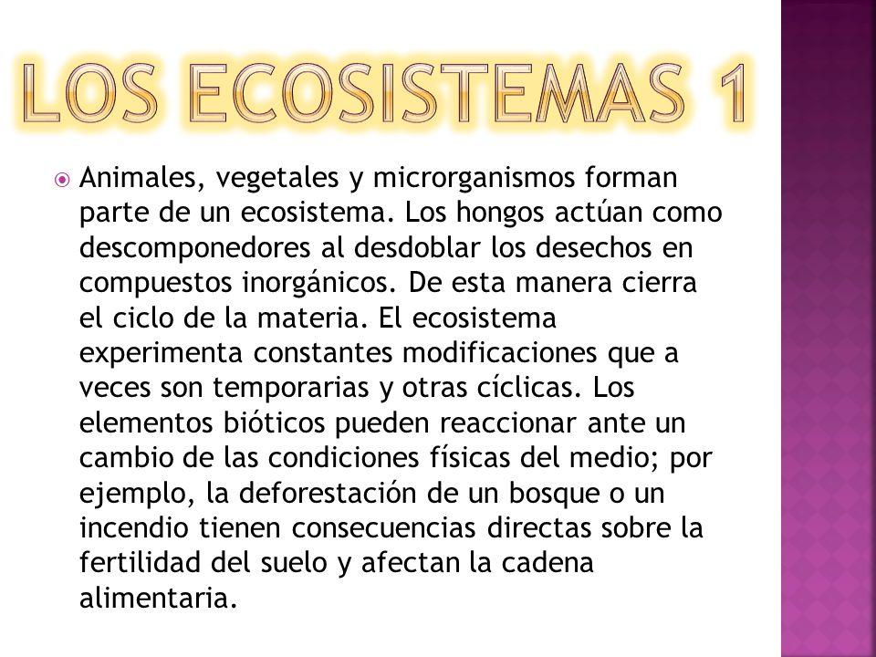 Animales, vegetales y microrganismos forman parte de un ecosistema. Los hongos actúan como descomponedores al desdoblar los desechos en compuestos ino