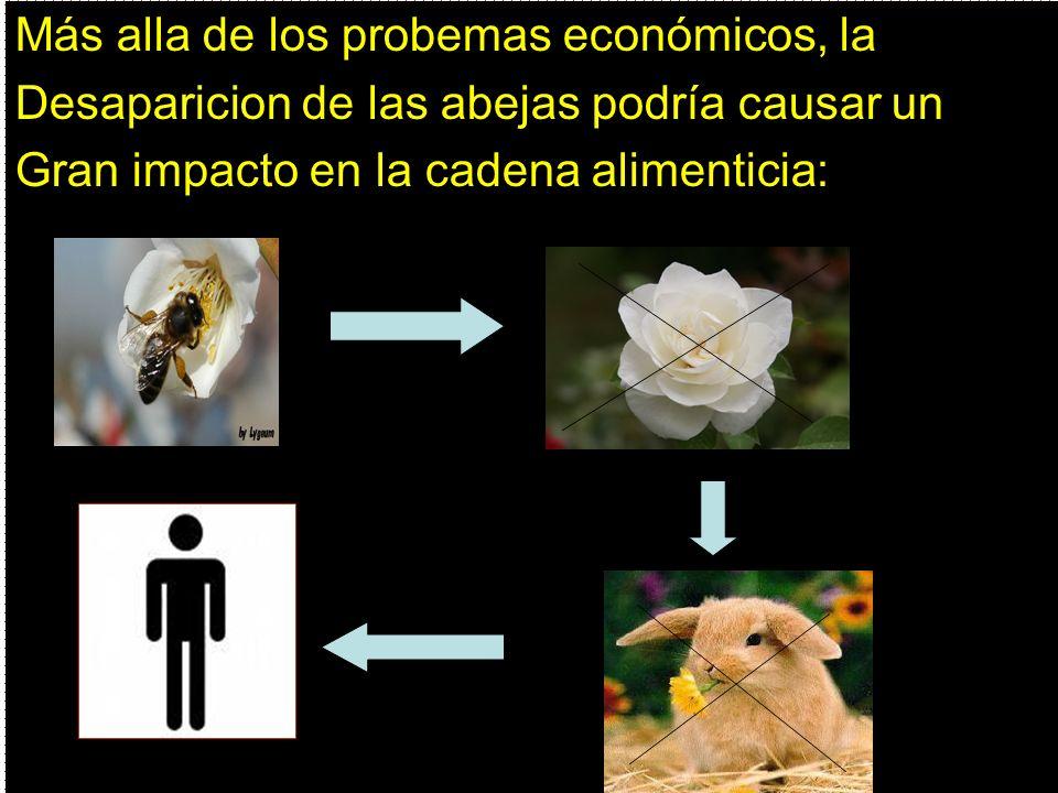 Más alla de los probemas económicos, la Desaparicion de las abejas podría causar un Gran impacto en la cadena alimenticia:
