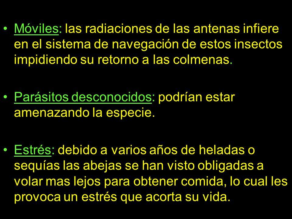 3.El estudio español.