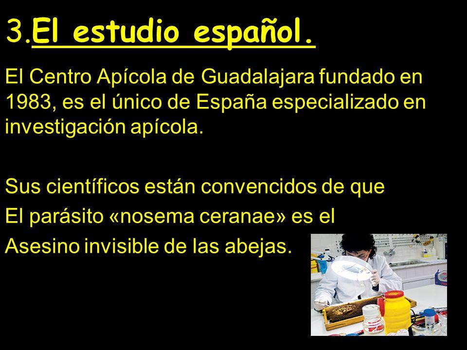 3.El estudio español. El Centro Apícola de Guadalajara fundado en 1983, es el único de España especializado en investigación apícola. Sus científicos