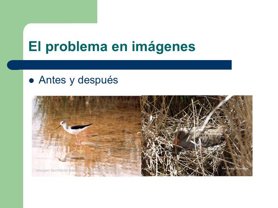 El problema en imágenes Antes y después