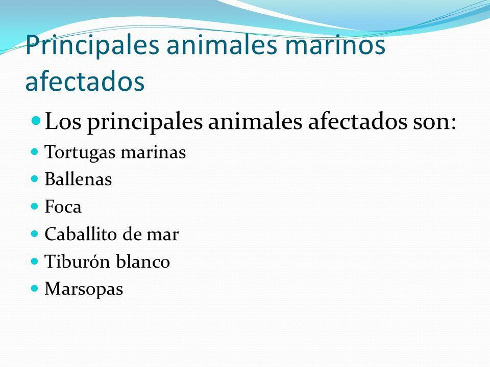 Principales animales marinos afectados Los principales animales afectados son: Tortugas marinas Ballenas Foca Caballito de mar Tiburón blanco Marsopas