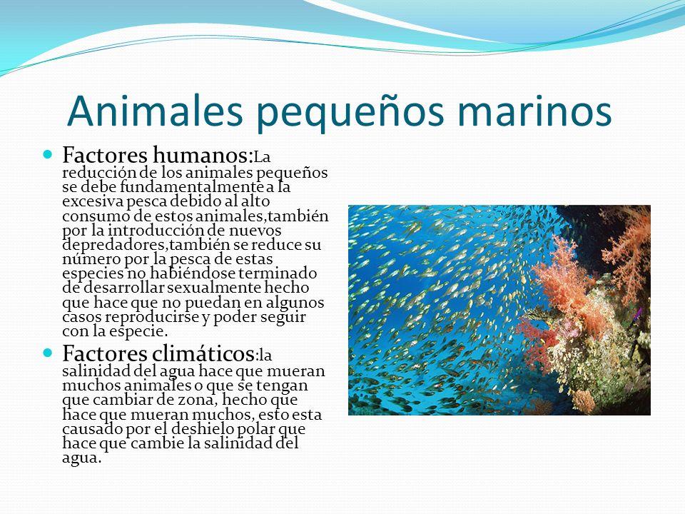 Animales pequeños marinos Factores humanos: La reducción de los animales pequeños se debe fundamentalmente a la excesiva pesca debido al alto consumo