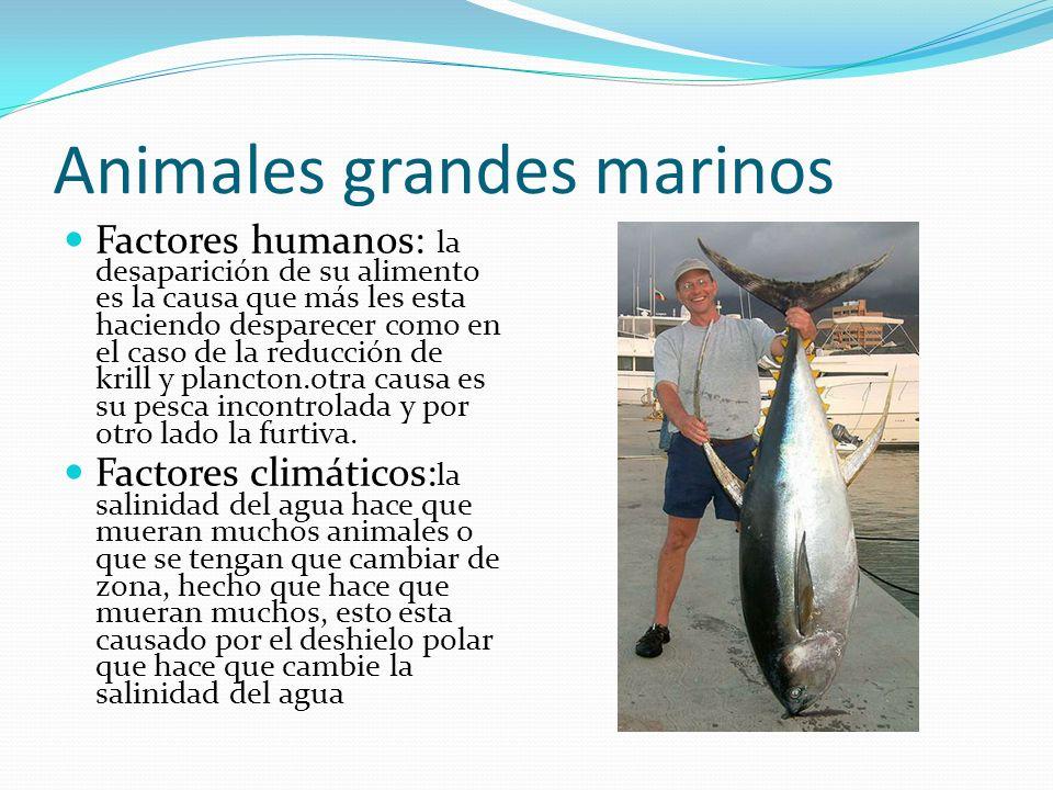 Animales grandes marinos Factores humanos: la desaparición de su alimento es la causa que más les esta haciendo desparecer como en el caso de la reduc