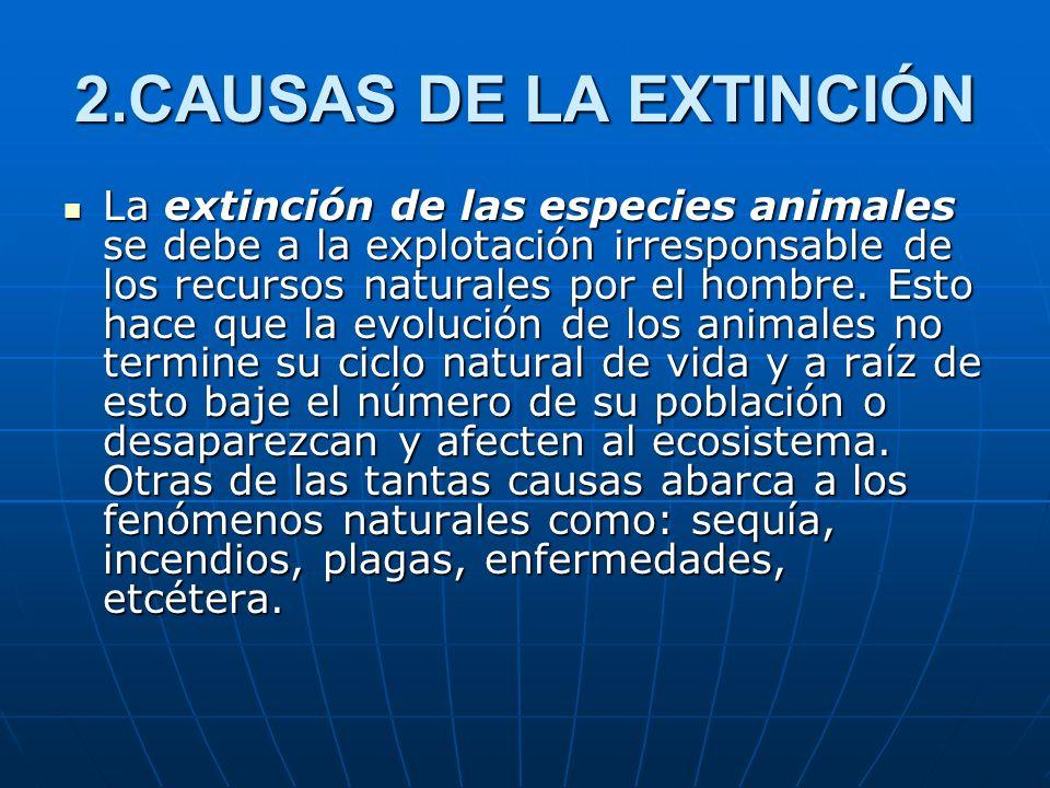 2.CAUSAS DE LA EXTINCIÓN La extinción de las especies animales se debe a la explotación irresponsable de los recursos naturales por el hombre. Esto ha