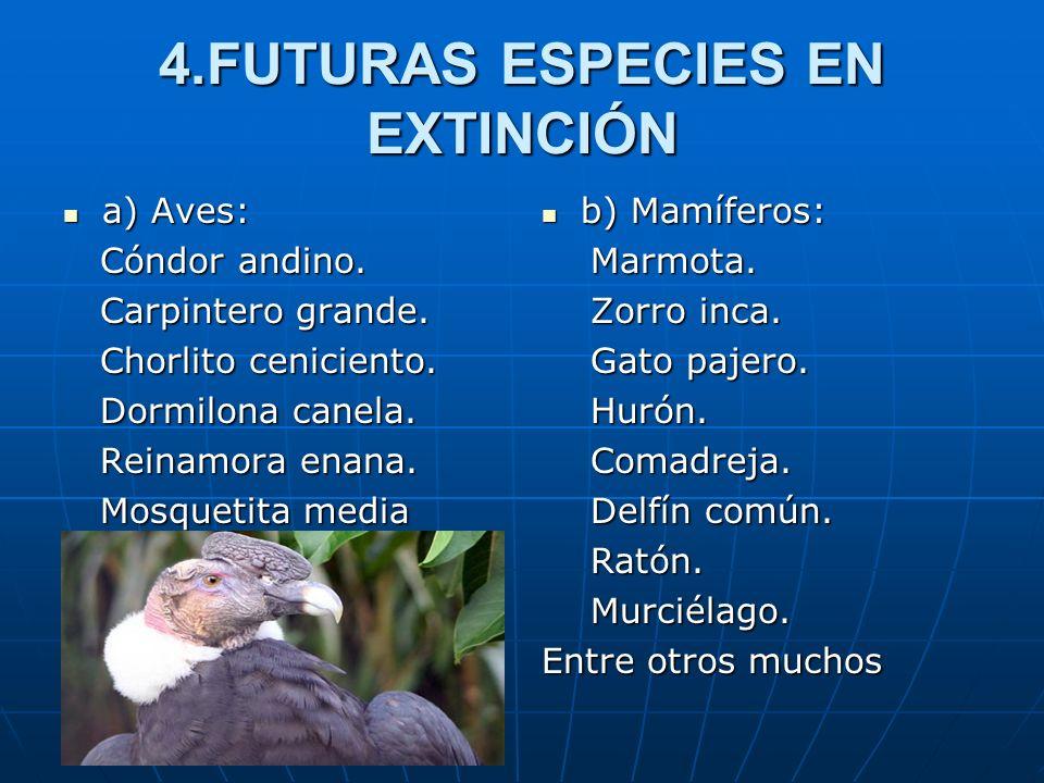 4.FUTURAS ESPECIES EN EXTINCIÓN a) Aves: a) Aves: Cóndor andino. Cóndor andino. Carpintero grande. Carpintero grande. Chorlito ceniciento. Chorlito ce
