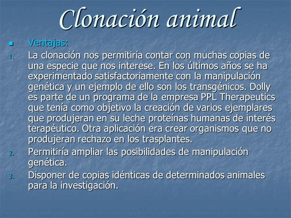 Clonación animal Ventajas: Ventajas: 1. La clonación nos permitiría contar con muchas copias de una especie que nos interese. En los últimos años se h