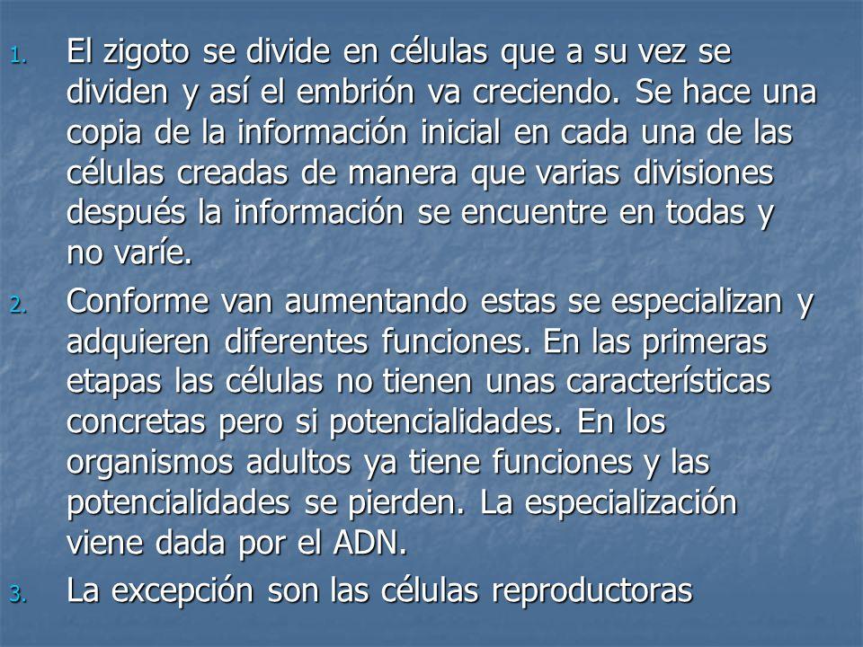 Bibliografía Universidad de Navarra Universidad de Navarra http://www.unav.es/cryf/clonación.html http://www.unav.es/cryf/clonación.html Wikipedia Wikipedia http://es.wikipedia.org/wiki/Clonaci%C3%B http://es.wikipedia.org/wiki/Clonaci%C3%B 3n http://es.wikipedia.org/wiki/Clonaci%C3%B