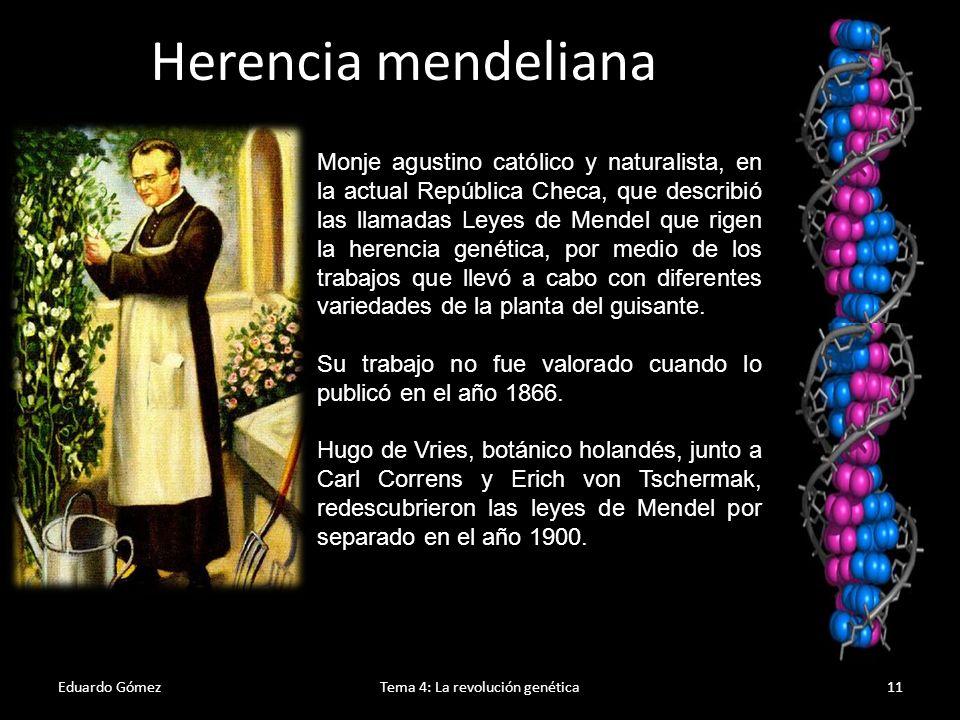 Experimentos de Mendel Eduardo GómezTema 4: La revolución genética12 Mendel seleccionó siete caracteres para sus experimentos, cada uno de los cuales tenía dos posibilidades y obtuvo razas puras de guisantes para cada uno de estos caracteres.