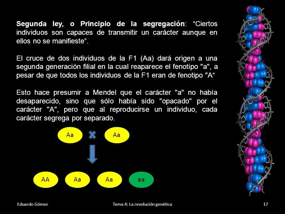 Eduardo GómezTema 4: La revolución genética18 Tercera ley, o Principio de la transmisión independiente: Esta ley hace referencia al cruce polihíbrido (monohíbrido: cuando se considera un carácter; polihibrido: cuando se consideran dos o más caracteres).