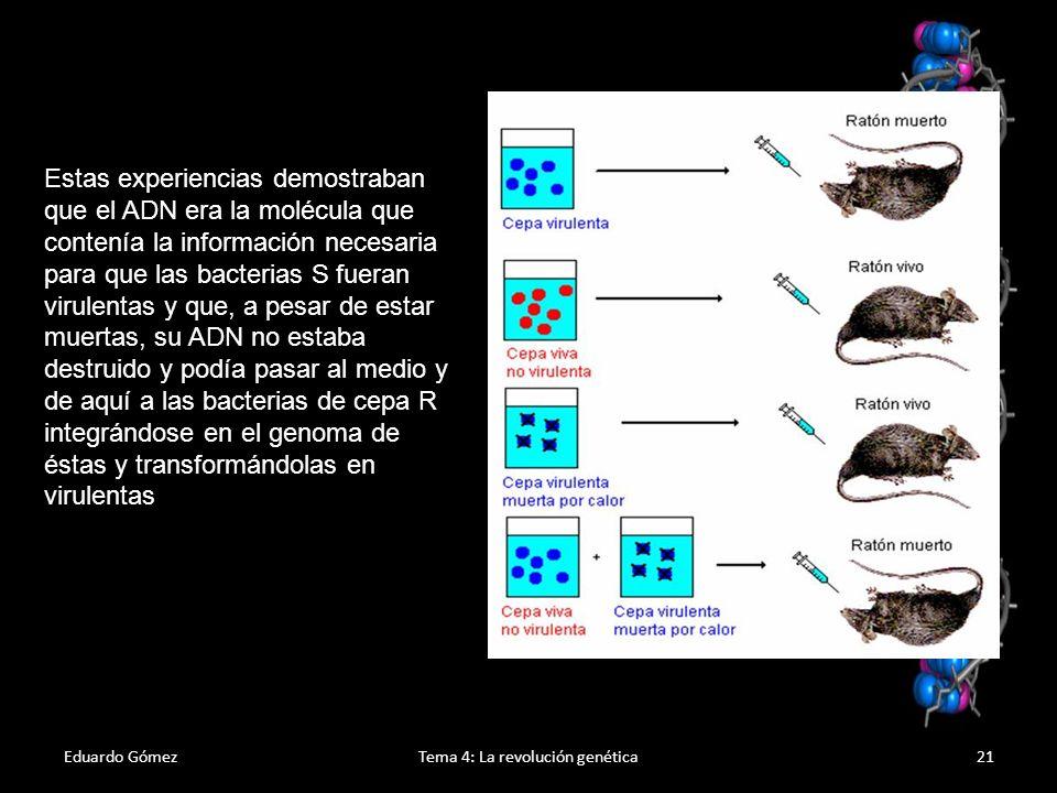 Eduardo GómezTema 4: La revolución genética22 Biología molecular Estudio de la vida a nivel molecular Esclarece la estructura molecular del ADN Estudia los procesos de formación de un ser vivo a partir del ADN: Replicación del ADN Transcripción a ARN Síntesis de proteínas Regulación de los genes Ciencia que nace a partir del descubrimiento de la estructura del ADN (1953, Watson y Crick)