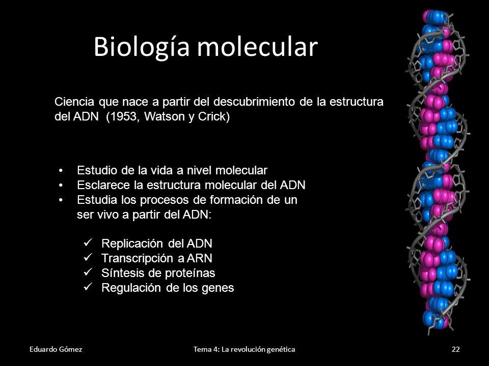 Eduardo GómezTema 4: La revolución genética23 El ADN El ADN está formado por dos cadenas antiparalelas de nucleótidos.