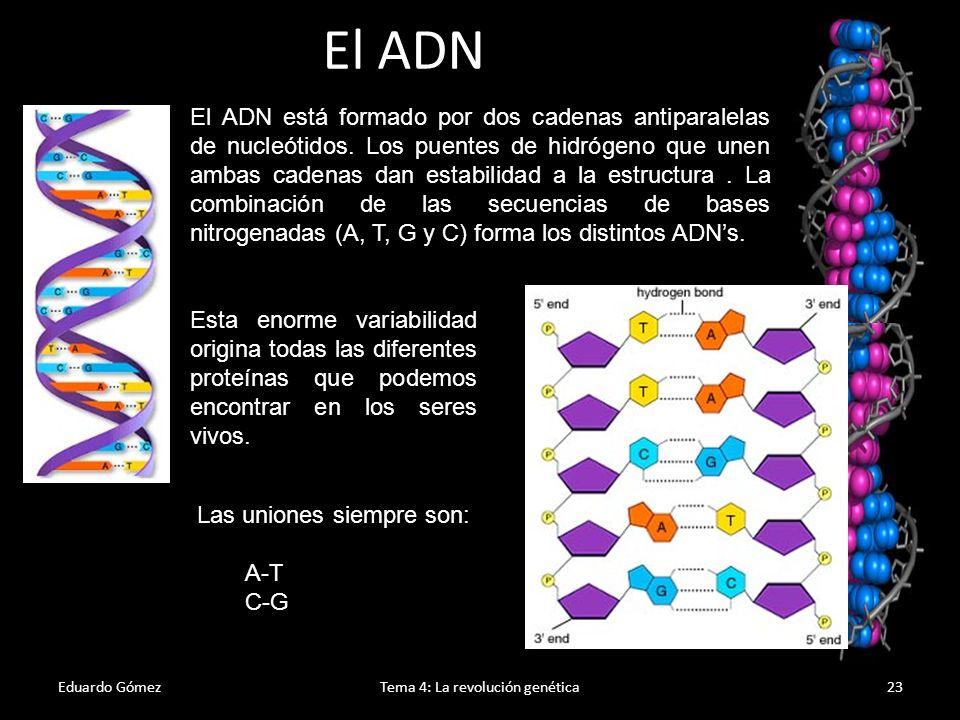 Eduardo GómezTema 4: La revolución genética24 Relación entre genes y proteínas El ADN (más concretamente, los genes que contiene y que se definen como segmentos de ADN que codifican una proteína) contiene la información con las características de los seres vivos.