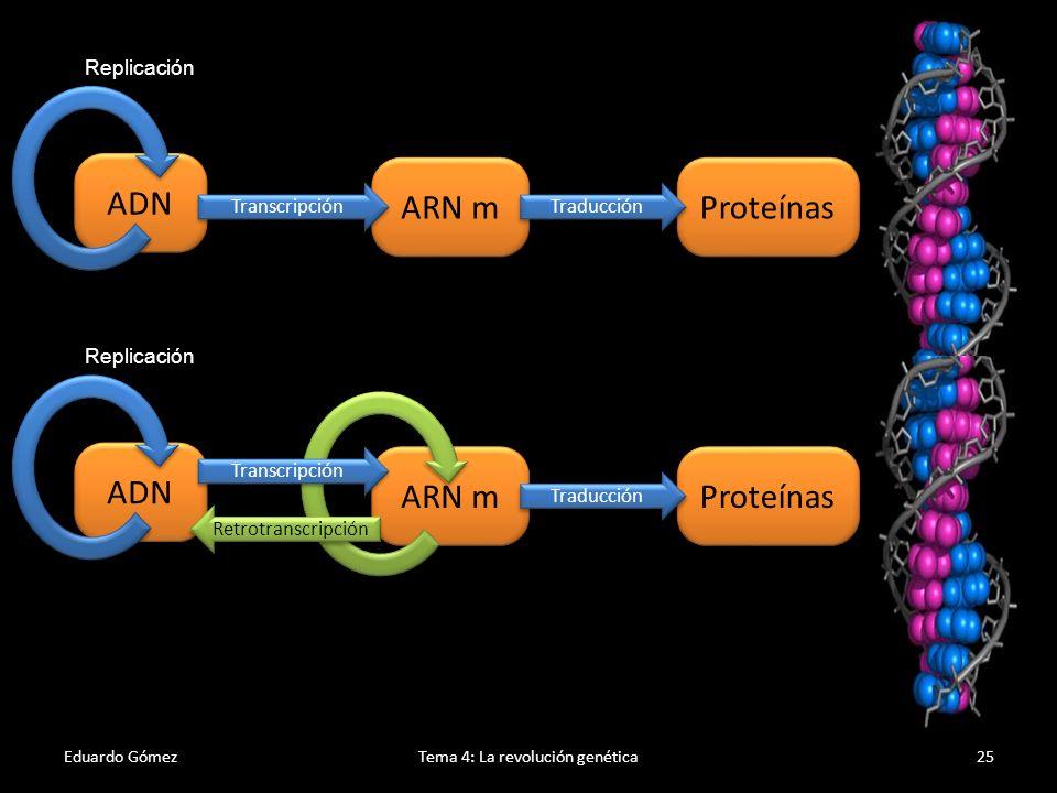 Eduardo GómezTema 4: La revolución genética26 A raíz de la modificación del Dogma central de la Biología Molecular se han cuestionado los conceptos de gen y ADN basura (ADN que no codifica información para proteínas).