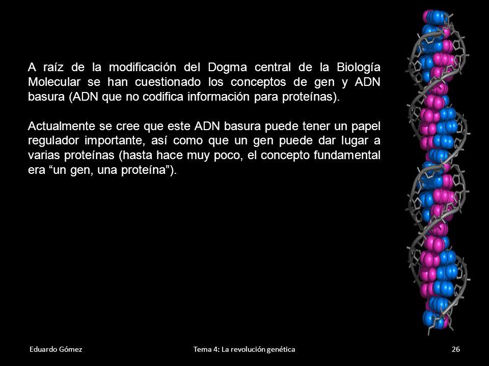 Eduardo GómezTema 4: La revolución genética27 Replicación del ADN 1.La replicación es el proceso en que se sintetizan dos copias idénticas de ADN tomando como molde otra cadena de ADN.