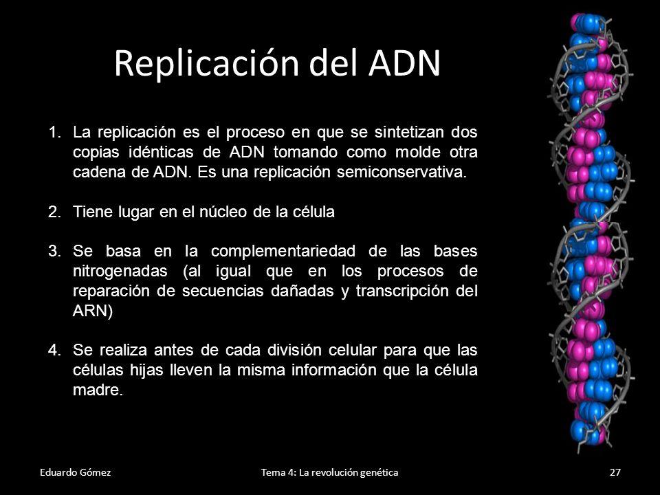 Eduardo GómezTema 4: La revolución genética28 Modelo conservativo Modelo dispersivo Modelo semiconservativo Modelos de replicación del ADN