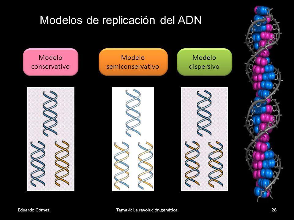 Replicación del ADN Eduardo GómezTema 4: La revolución genética29