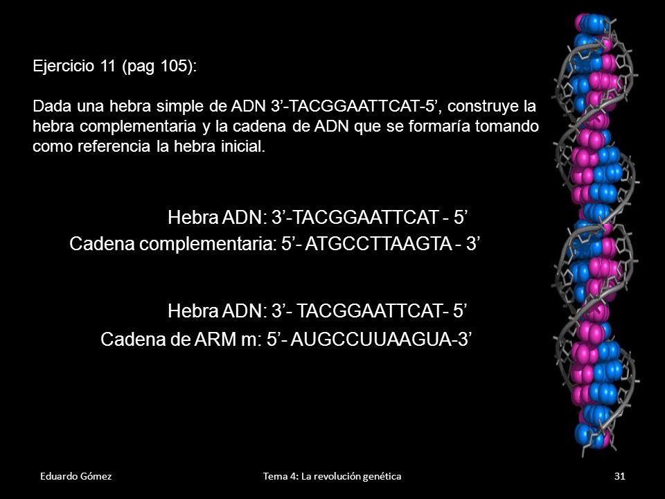 Eduardo GómezTema 4: La revolución genética32 Transcripción del ADN 1.Se basa en el mismo mecanismo (complementariedad de bases) que la replicación, pero intervienen enzimas diferentes y se sustituye la base nitrogenada Timina por Uracilo.