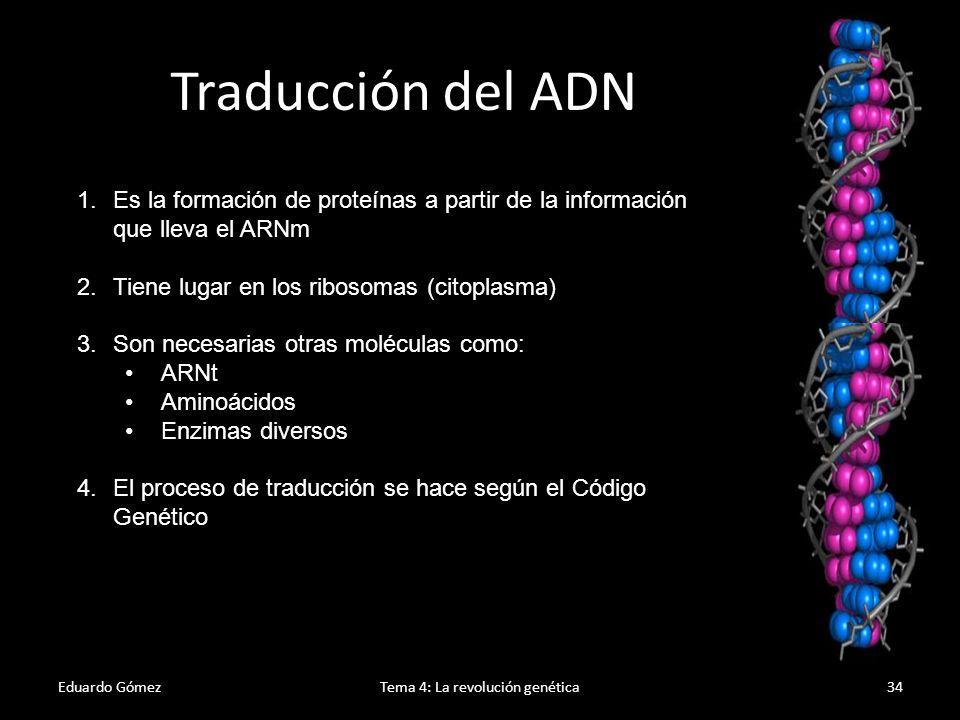 Eduardo GómezTema 4: La revolución genética35 Traducción del ADN 1.Las proteínas están formadas por aminoácidos.