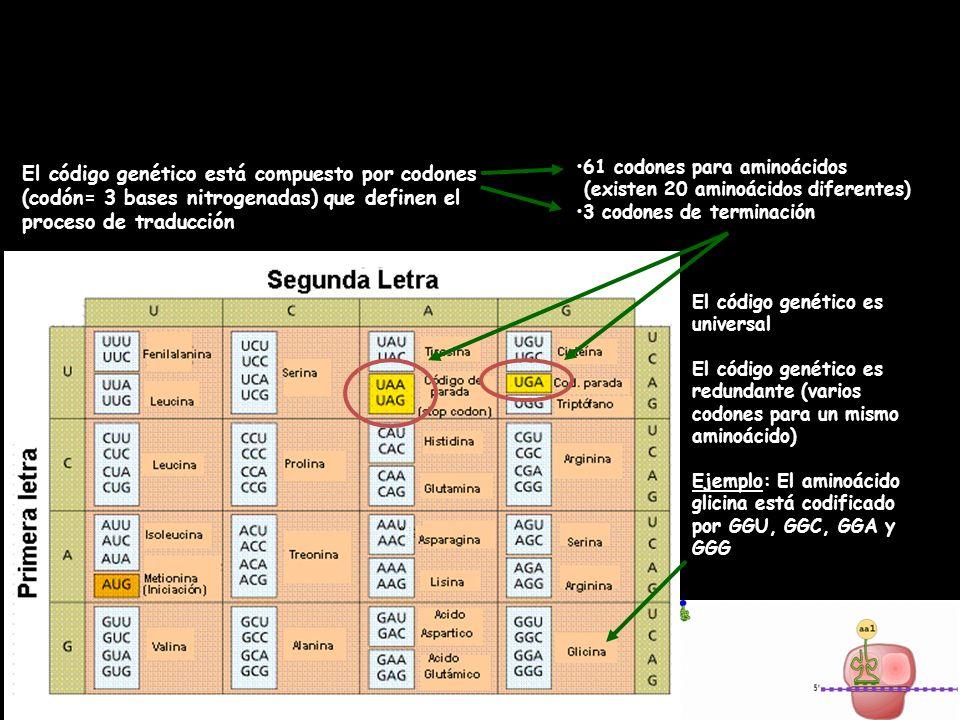 Código genético Eduardo GómezTema 4: La revolución genética37
