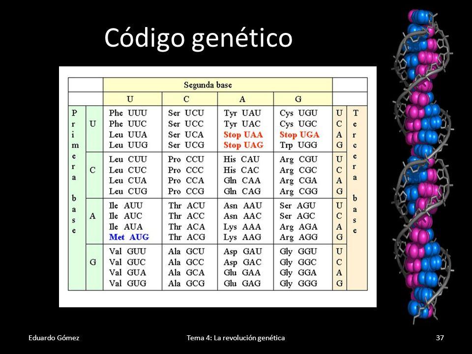 Eduardo GómezTema 4: La revolución genética38 AUG - CCU – AAG – UUU – GCU – CUC ….