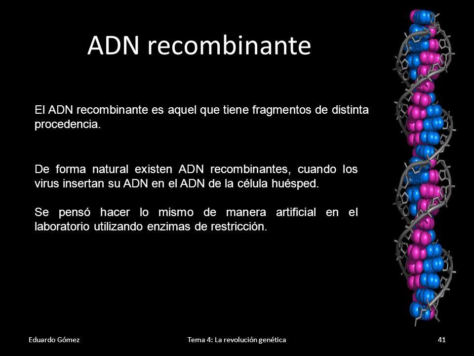 Enzimas de restricción Eduardo GómezTema 4: La revolución genética42 1.Estas enzimas, procedentes de bacterias, tienen la capacidad de reconocer una secuencia determinada de nucleótidos y extraerla del resto de la cadena.