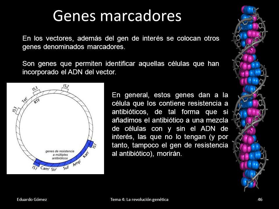 Eduardo GómezTema 4: La revolución genética47 Las bacterias que no crecen en presencia de tetraciclina pero que crecen en presencia de ampicilina son las que contienen un plásmido recombinado.