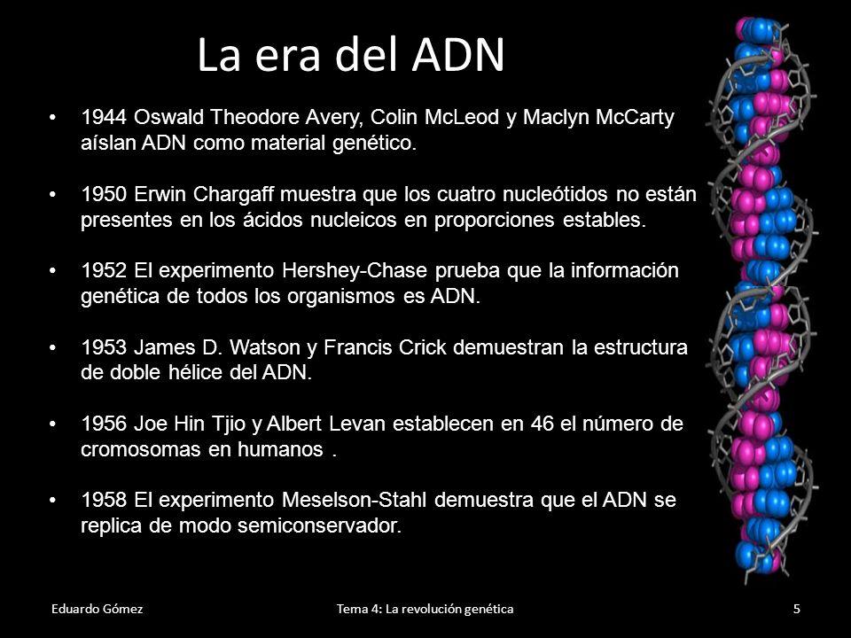 Eduardo GómezTema 4: La revolución genética6 1961 El código genético se ordena en tripletes 1964 Howard Temin muestra, utilizando virus de ARN, que la dirección de transcripción ADN-ARN puede revertirse 1970 Se descubren las enzimas de restricción, lo que permite a los científicos cortar y pegar fragmentos de ADN