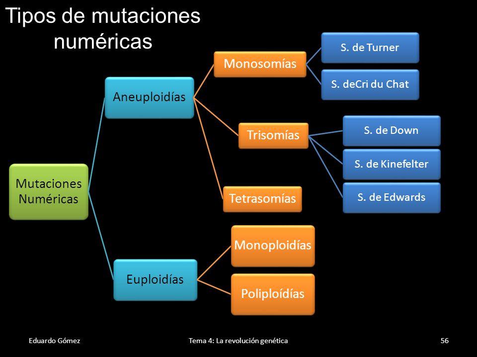 Aneuploidía Eduardo GómezTema 4: La revolución genética57