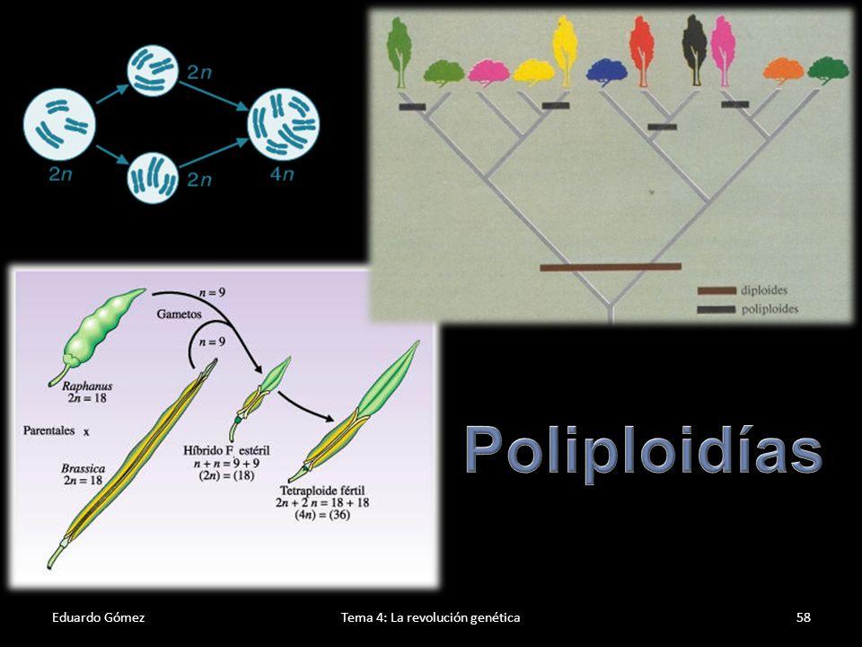 Eduardo GómezTema 4: La revolución genética59 Genoma humano El Proyecto Genoma Humano es una investigación internacional que busca seleccionar un modelo de organismo humano por medio del mapeo de la secuencia de su DNA.