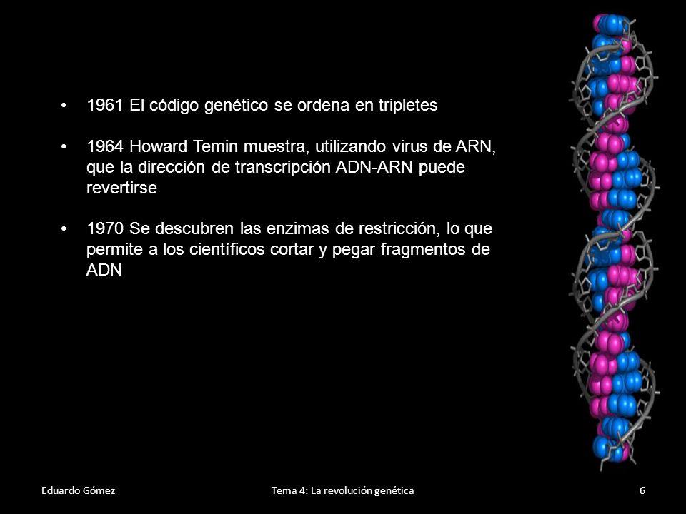 La era de la genómica Eduardo GómezTema 4: La revolución genética7 1972: Walter Fiers y su equipo, en el Laboratorio de biología molecular de la Universidad de Ghent (Bélgica) fueron los primeros en determinar la secuencia de un gen: el gen para la proteína del pelo del bacteriófago MS2.