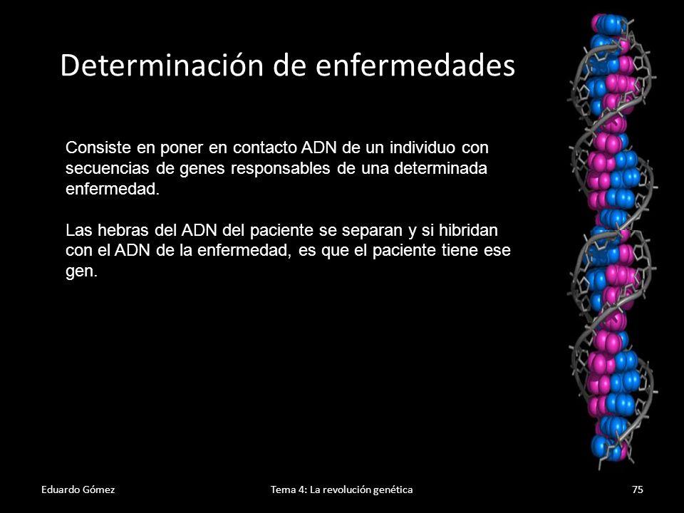 Eduardo GómezTema 4: La revolución genética76