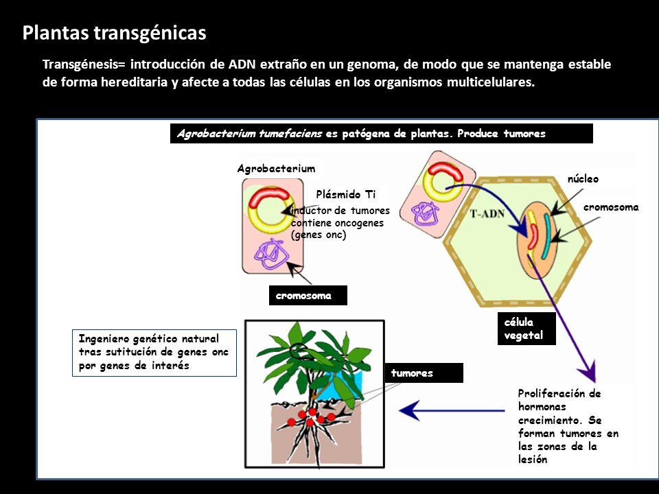 Eduardo GómezTema 4: La revolución genética82