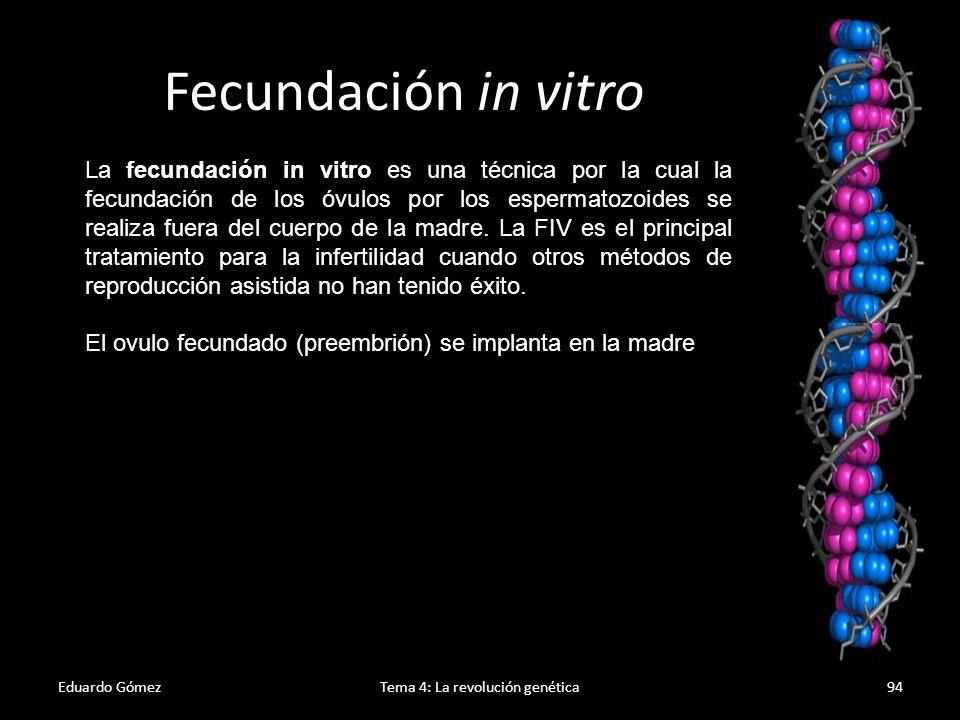 Proceso FIV Eduardo GómezTema 4: La revolución genética95 1.Estimulación ovárica por medio de hormonas 2.Extracción de óvulos y espermatozoides 3.Fecundación extrauterina 4.Divisiones de los preembriones 5.Implantación de los preembriones seleccionados Es una técnica con un elevado porcentaje de éxito