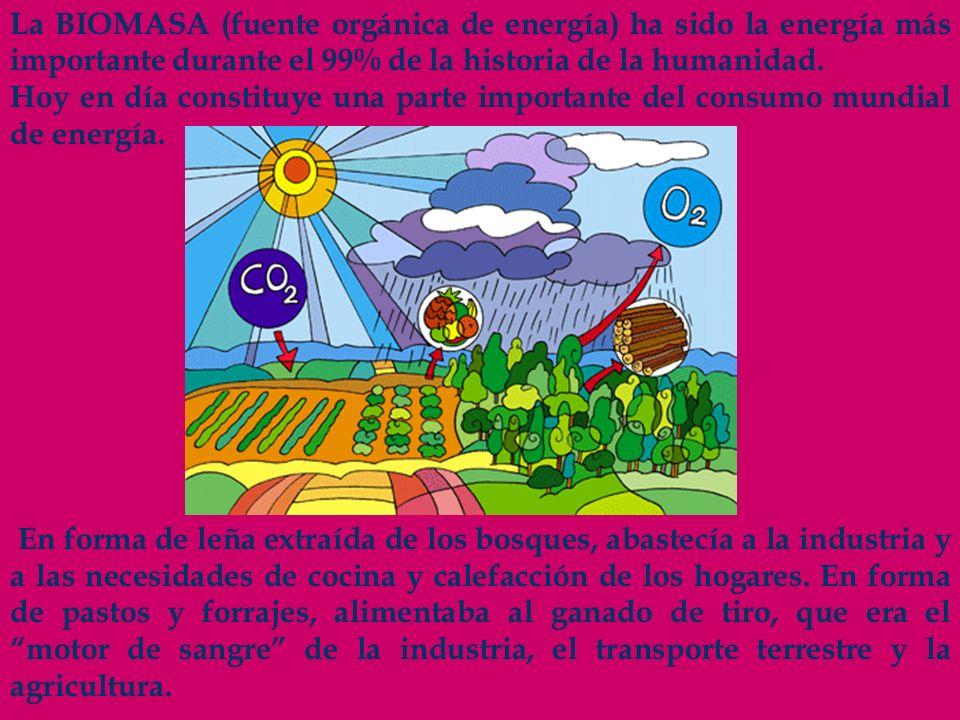 La BIOMASA (fuente orgánica de energía) ha sido la energía más importante durante el 99% de la historia de la humanidad. Hoy en día constituye una par