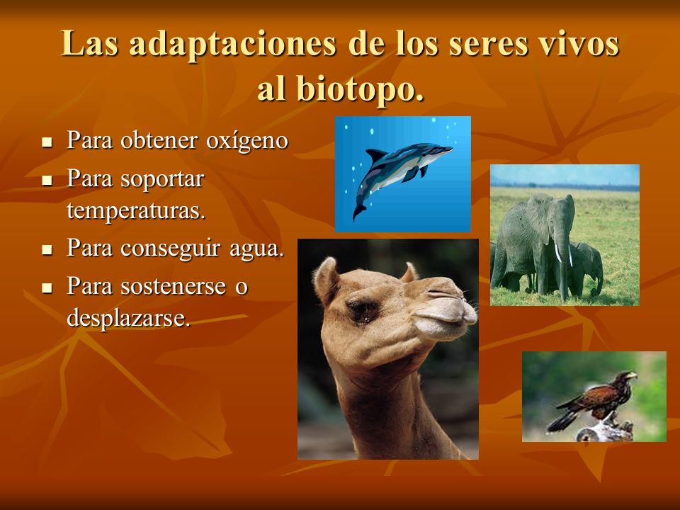 Las adaptaciones de los seres vivos al biotopo. Para obtener oxígeno Para obtener oxígeno Para soportar temperaturas. Para soportar temperaturas. Para