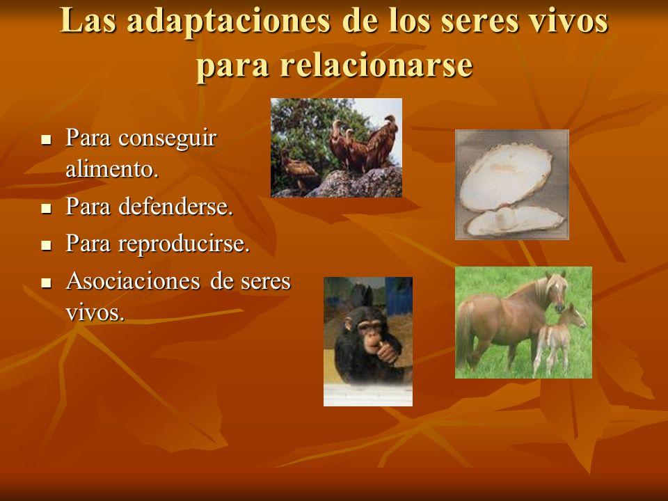 Las adaptaciones de los seres vivos para relacionarse Para conseguir alimento. Para conseguir alimento. Para defenderse. Para defenderse. Para reprodu