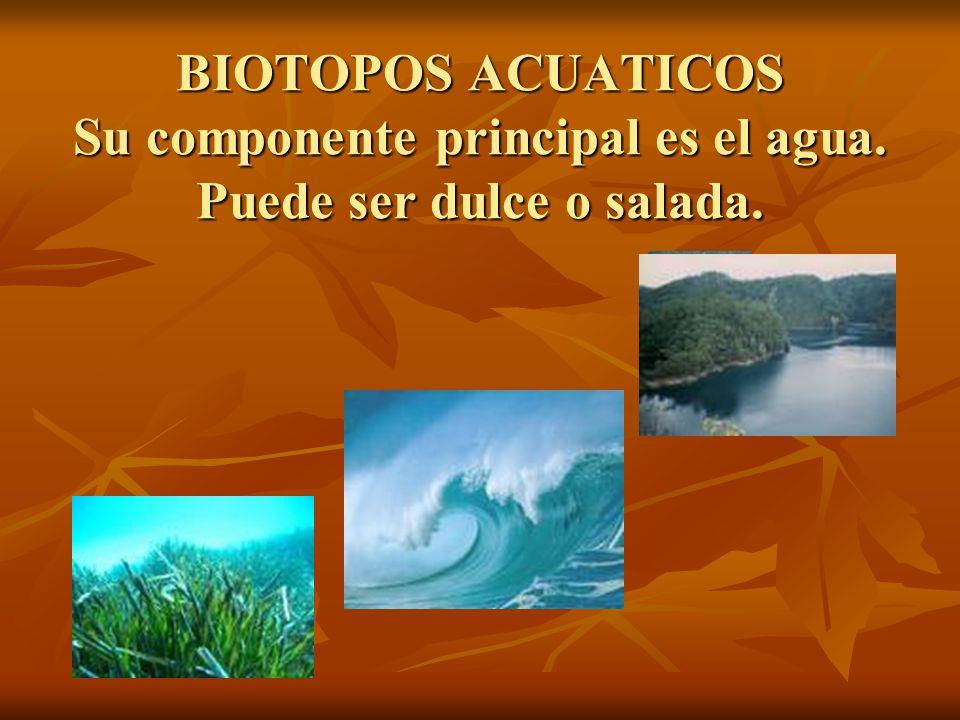 BIOTOPOS ACUATICOS Su componente principal es el agua. Puede ser dulce o salada.
