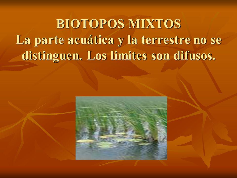 BIOTOPOS MIXTOS La parte acuática y la terrestre no se distinguen. Los limites son difusos.