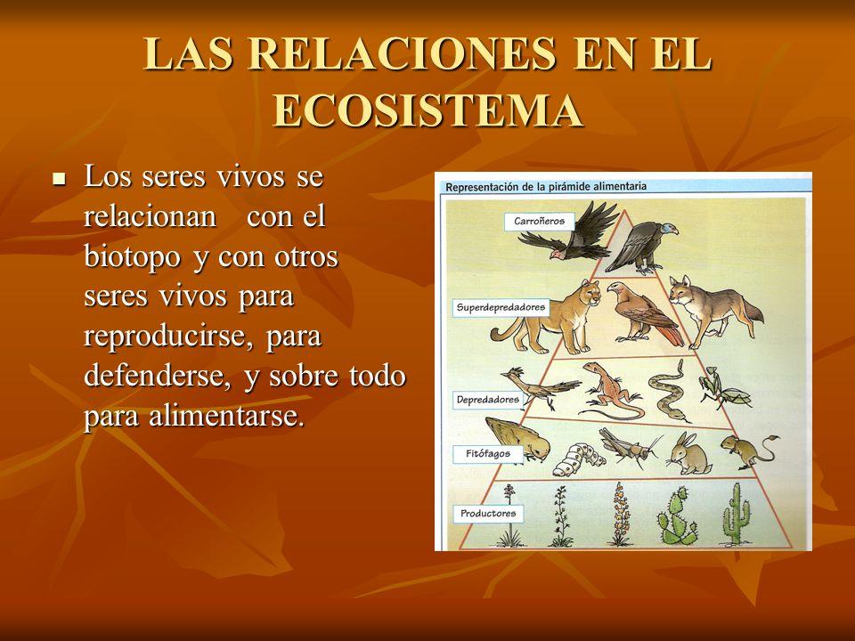 LAS RELACIONES EN EL ECOSISTEMA Los seres vivos se relacionan con el biotopo y con otros seres vivos para reproducirse, para defenderse, y sobre todo
