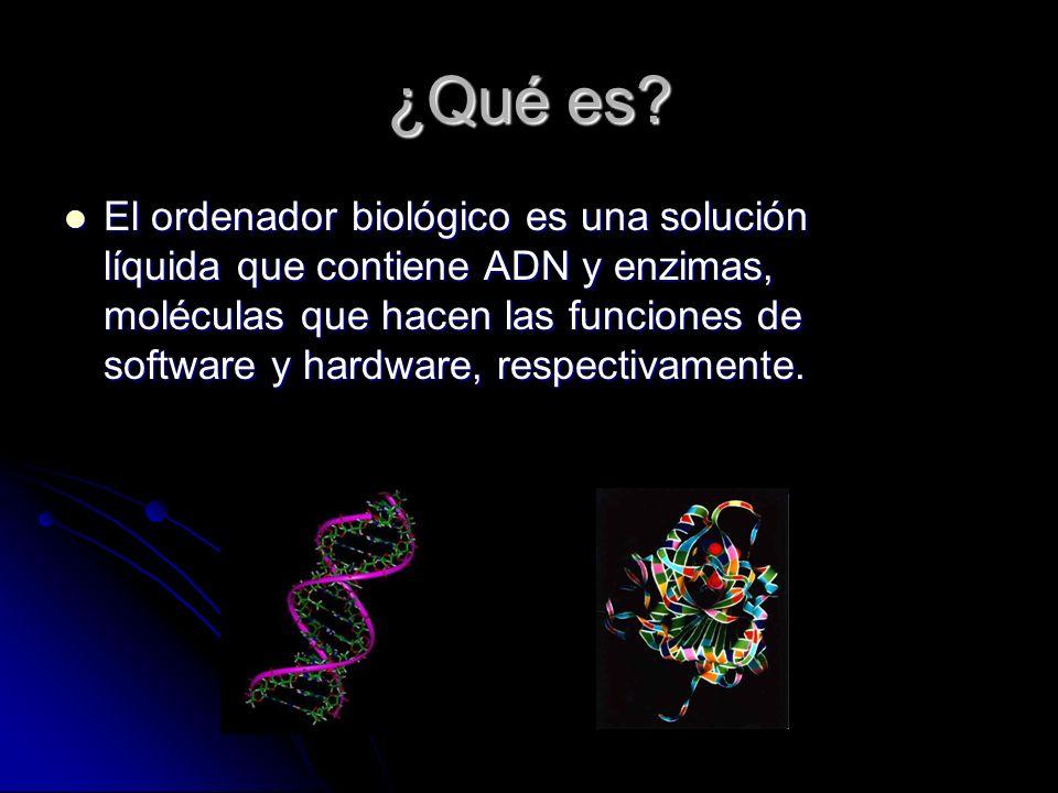 ¿Qué es? El ordenador biológico es una solución líquida que contiene ADN y enzimas, moléculas que hacen las funciones de software y hardware, respecti