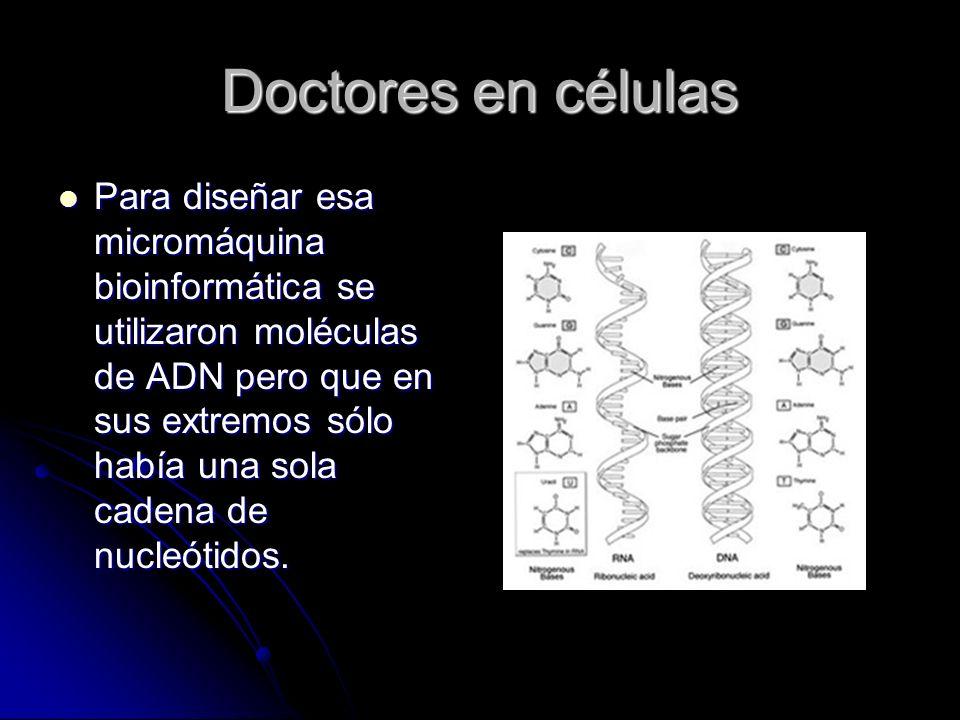 Doctores en células Para diseñar esa micromáquina bioinformática se utilizaron moléculas de ADN pero que en sus extremos sólo había una sola cadena de