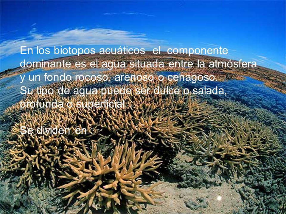 En los biotopos acuáticos el componente dominante es el agua situada entre la atmósfera y un fondo rocoso, arenoso o cenagoso. Su tipo de agua puede s