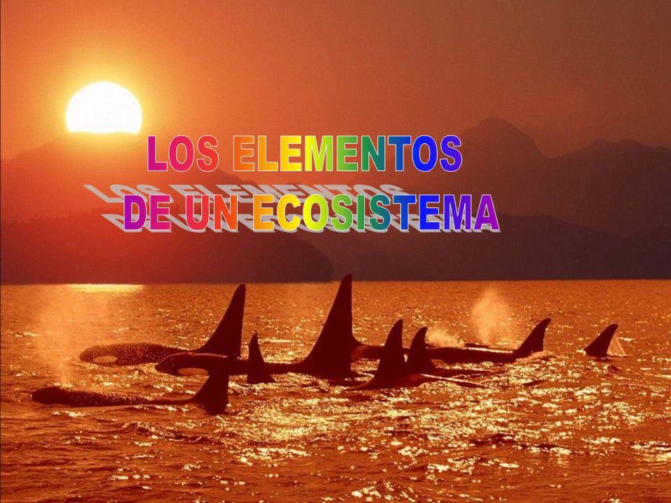 Un ecosistema es el conjunto formado por: 1.El biotopo, que esta formado por los componentes no vivos de esa zona.