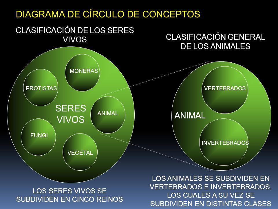 PROTISTAS MONERAS ANIMAL VEGETAL FUNGI SERES VIVOS VERTEBRADOS INVERTEBRADOS ANIMAL CLASIFICACIÓN DE LOS SERES VIVOS CLASIFICACIÓN GENERAL DE LOS ANIM