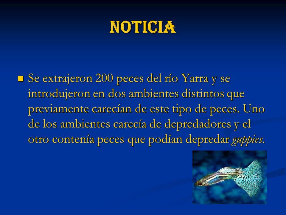 Noticia Se extrajeron 200 peces del río Yarra y se introdujeron en dos ambientes distintos que previamente carecían de este tipo de peces.
