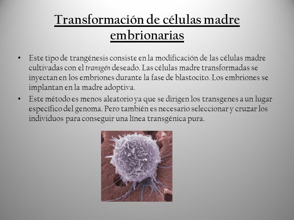 El primer animal transgénico fue creado en 1982.